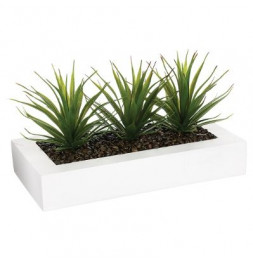 Centre de table - 3 Aloe Vera - H 17 cm