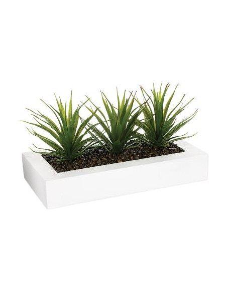 Centre de table - 3 Aloe Vera - H 17 cm