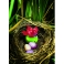 Minuteur oiseau - Vert et rouge - Timer Emy