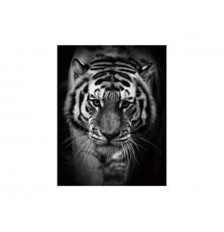Tableau  en verre - Tiger - L 80 cm x H 120 cm